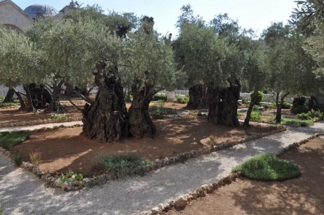 4. Gradina Ghetsimani [640×480]